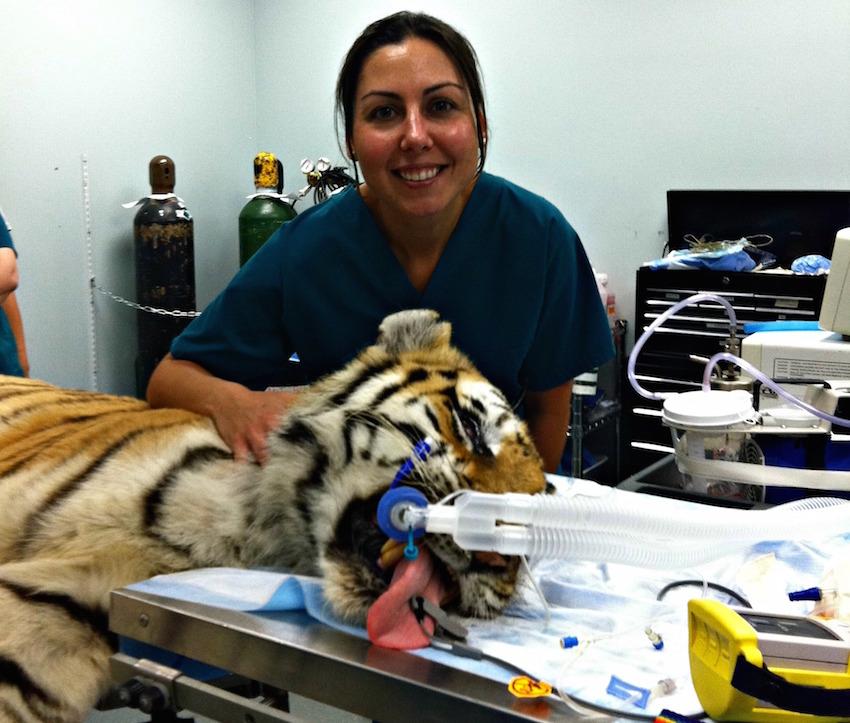 Tampa Animal Surgeon